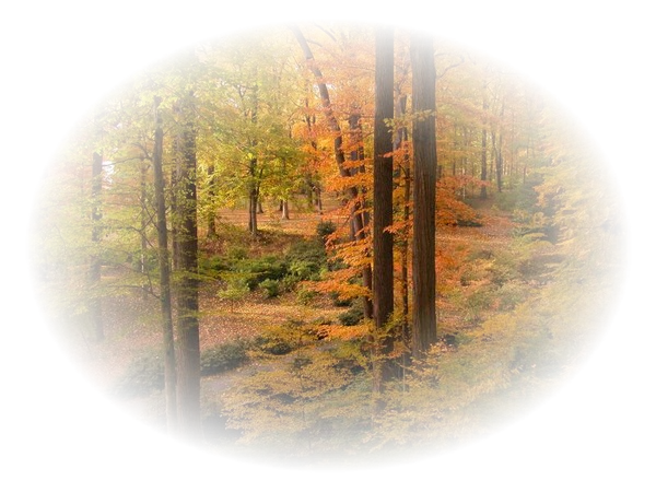 tube automne